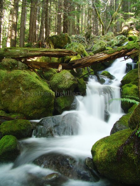 Crest Mountain Creek on Vancouver Island