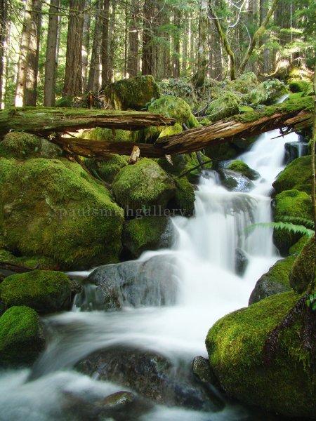 Crest Mountain Creek on Vancouver Island