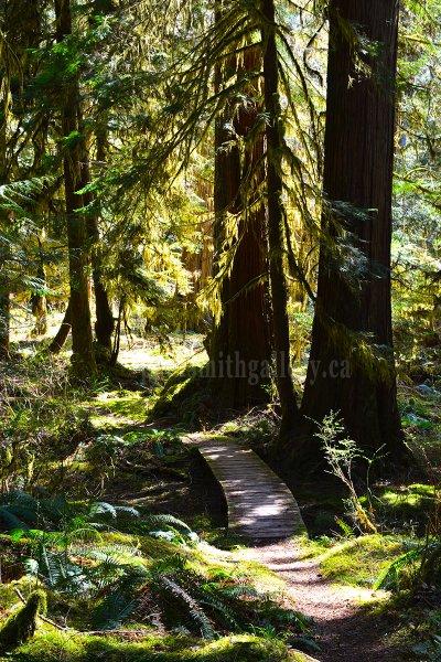 Antler Lake Trail in Gold River