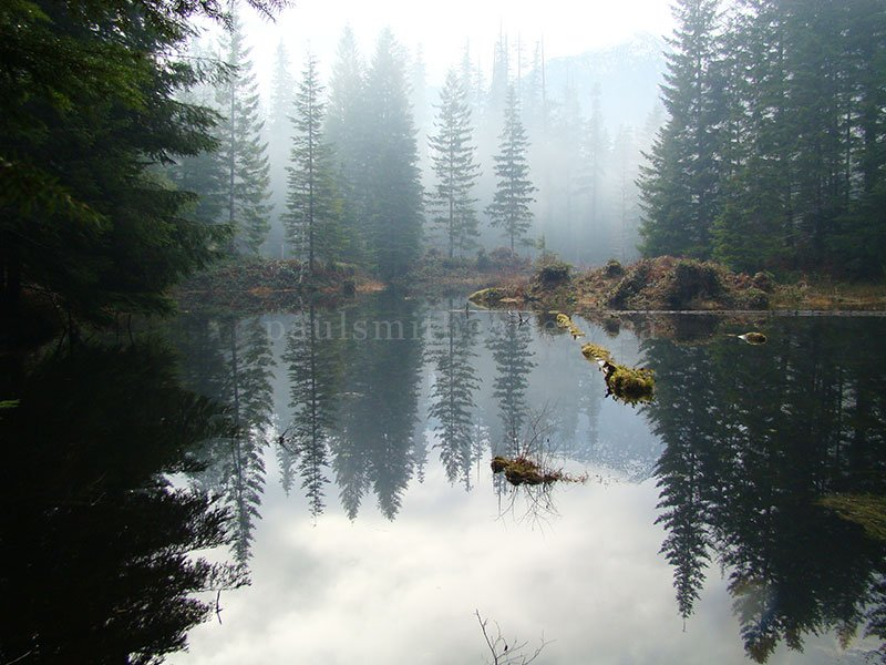 Foggy Beaver Pond on Vancouver Island
