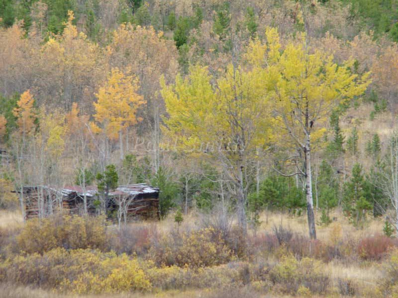 Trappers Cabin in the Neamiah Valley